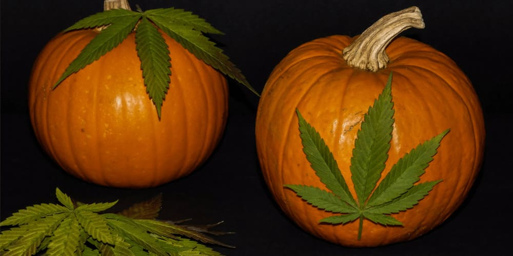 Halloweed: Why Combine Cannabis and Halloween?